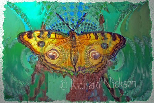 fractal butterfly_Painting
